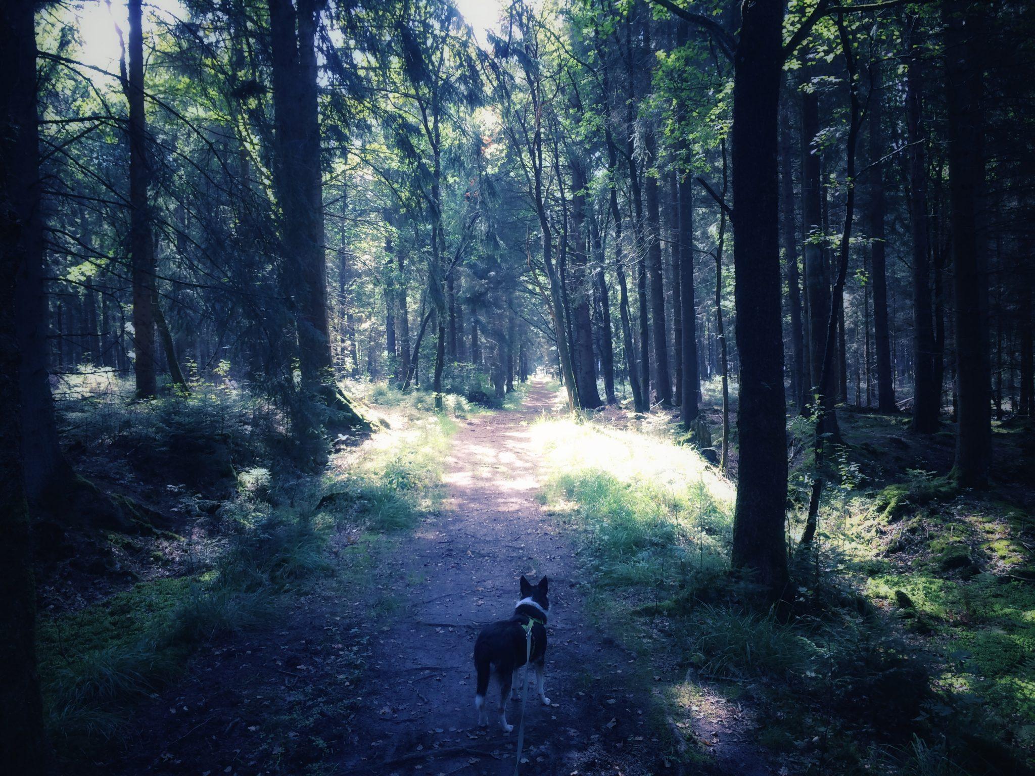Auslandshund im Wald
