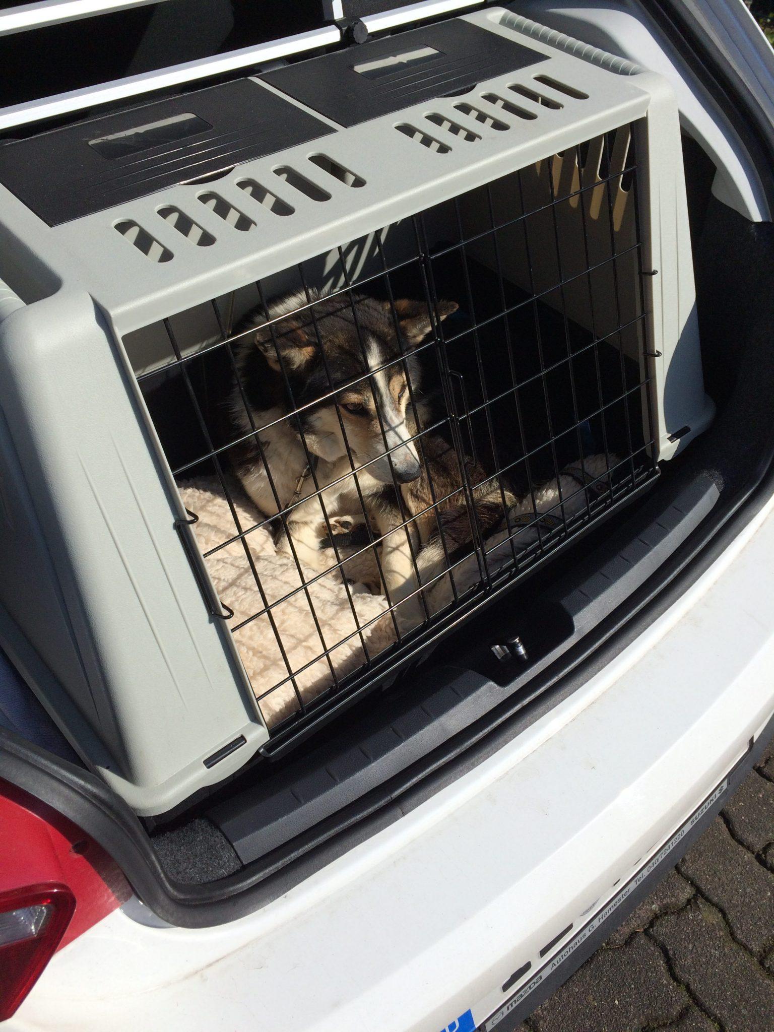 Auslandshund in Hundebox im Auto