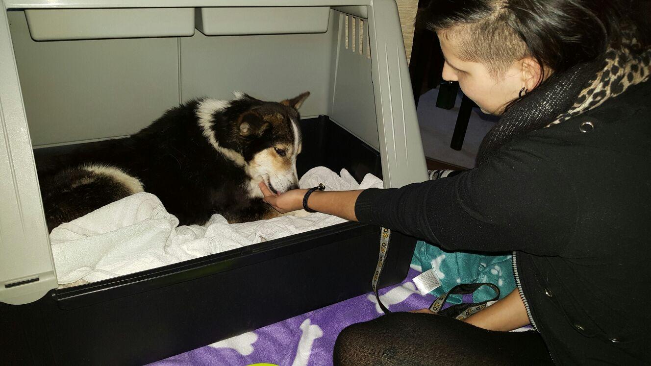 Auslandshund / Hund in Box wird aus Hand gefüttert